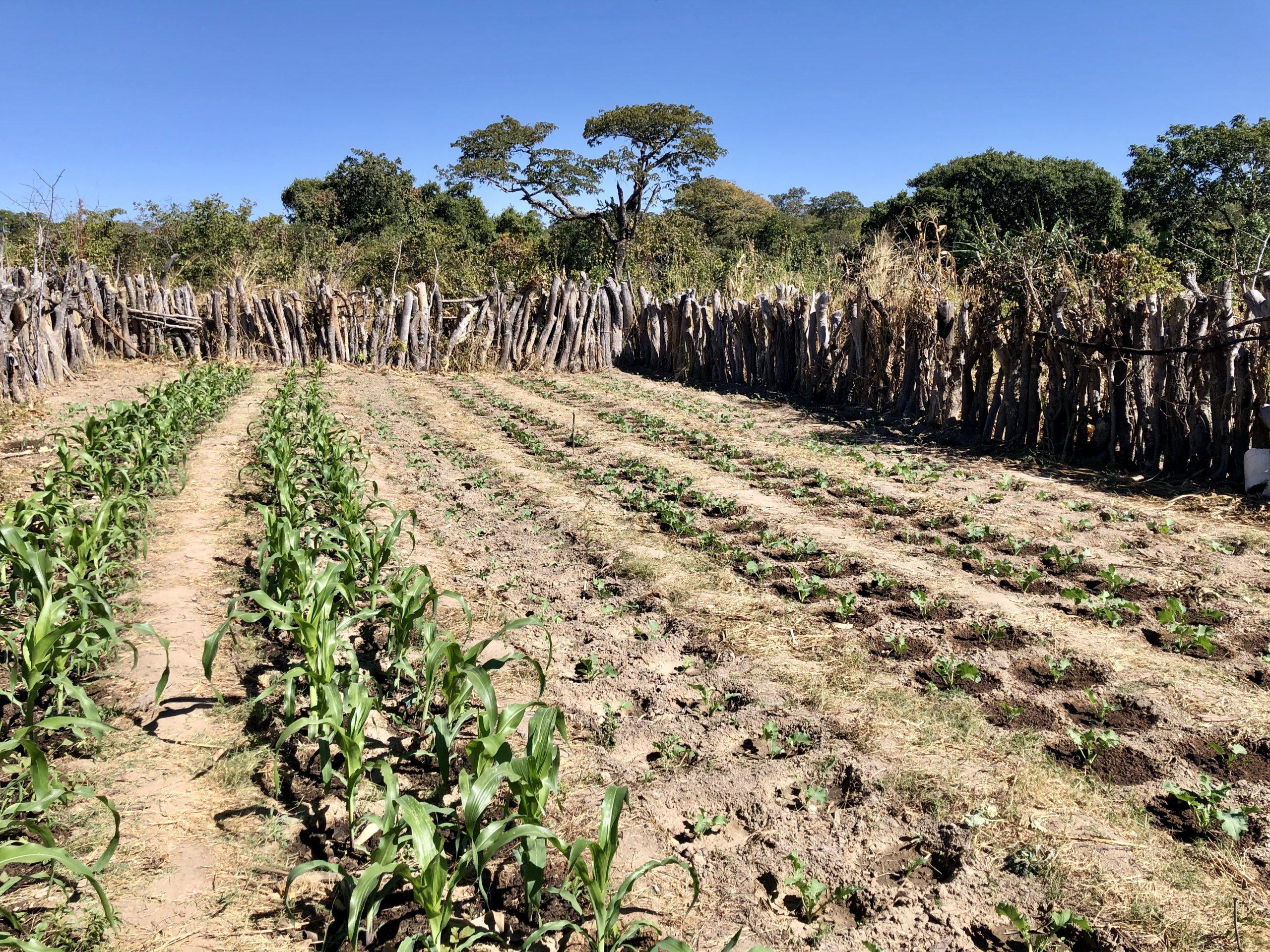 On Call Africa Simwatachela Community